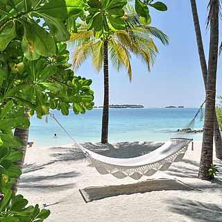 Weiße Hängematte zwischen Palmen und Strand mit Blick aufs Meer