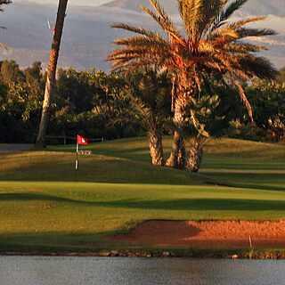 Palmen auf einem Golfplatz