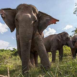 Elefantenherde Projekt TUI Care Foundation