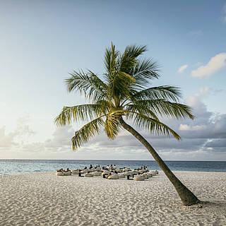 Meer und Strand mit einer Palma am rechten Bildrand