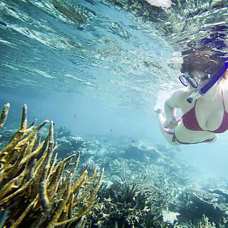 Eine Frau die beim Schnorcheln einige Korallen sieht