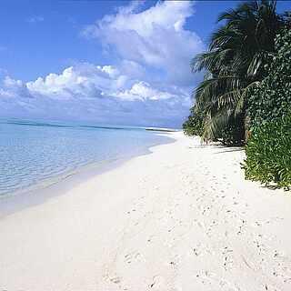 Weißsandiger Strandabschnitt mit Palmen und hellblauem Wasser