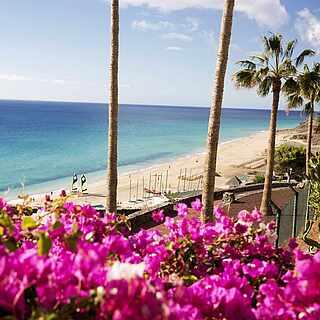 Klippe mit Blumen, Palmen und Ausblick auf den Strand und das Meer