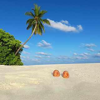 Strand mit Palme und Buschwerk, im Sand liegen zwei Eier mit ROBINSON Logo
