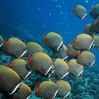 Erkunden der blauen Unterwasserwelt beim Tauchen