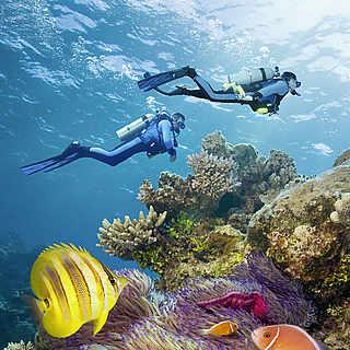 Zwei Menschen tauchen im Meer und sind umgeben von bunten Fischen